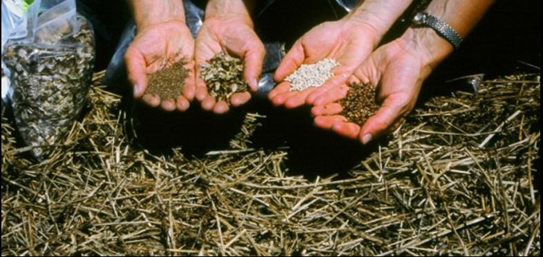 seeds-e1401574430918