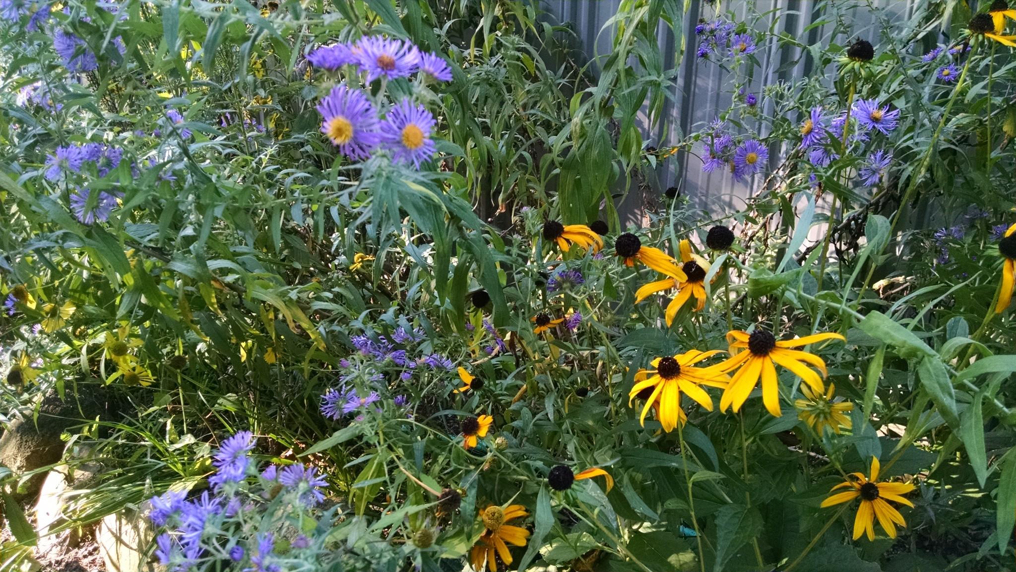 2014 09 23 171749 - Wildflower Garden
