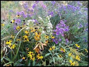 bouquet mix michigan wildflower farm
